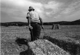 la lettera del contadino Giuseppe, toscano di 83 anni,AD UN ANIMALISTA